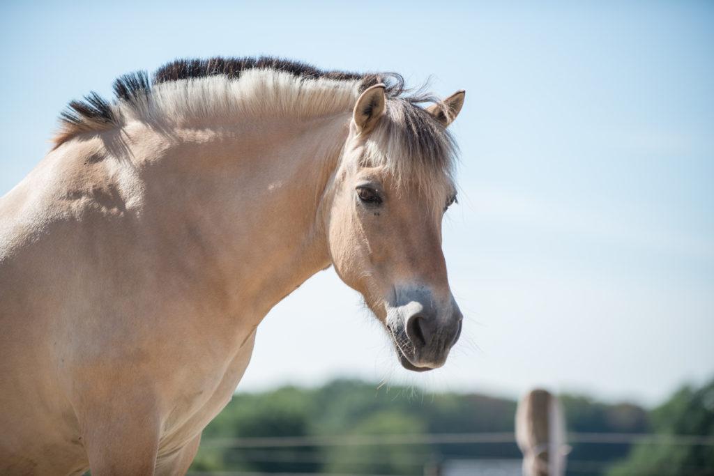 Ein Pony von der Seite