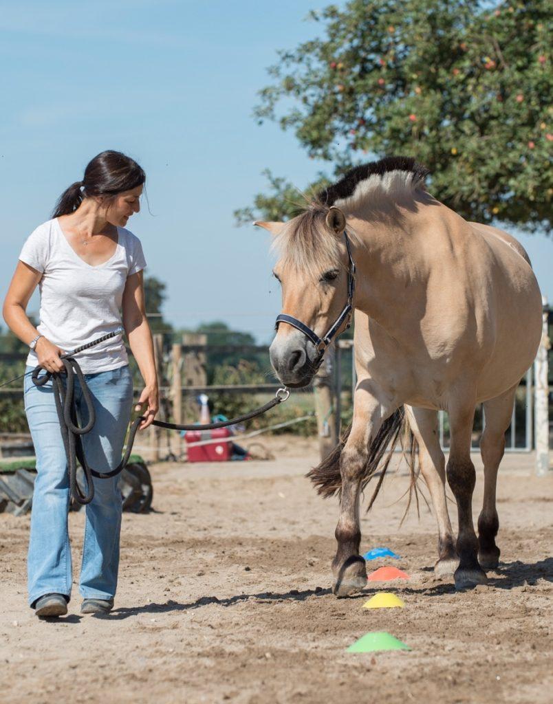 Eine Frau führt ein Pony durch einen Parcours.
